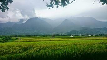 一大片稻田連綿到中央山脈