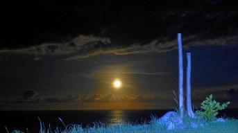 不忍分離的漂流木情侶,天天在「天地海」一起看海.賞月.觀日出....