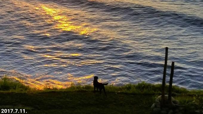 最愛陪我一起看海的小黑狗「小咖」, 一轉眼就跟我相處五年了,雖然牠常常不乖,追車追鄰居的狗,很令鄰居討厭,但牠坎坷的成長過程,令我不得不繼續用最大的愛心耐心慢慢教牠....