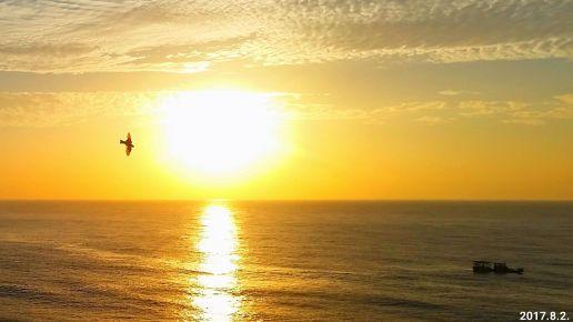 特別喜愛優雅的燕子 凌空飛翔~~~